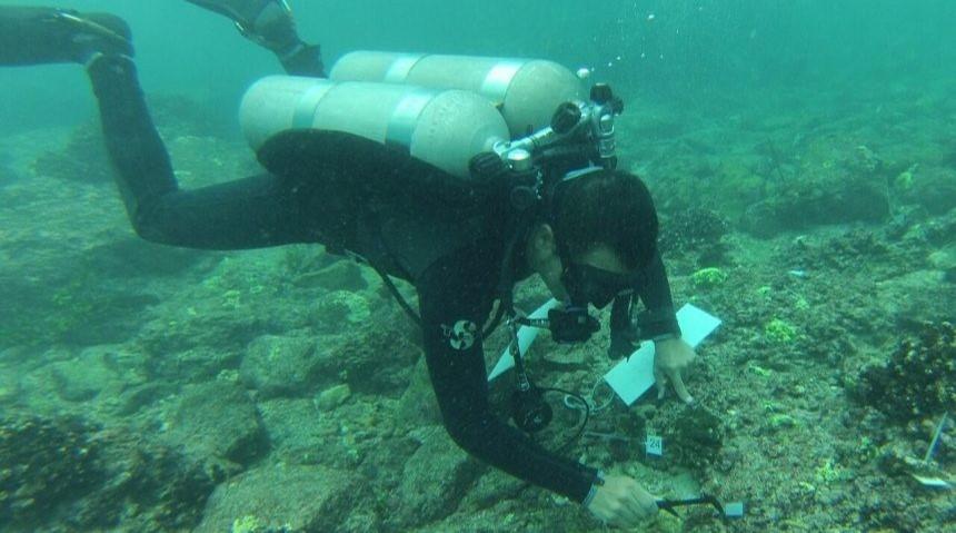 La Restauración de corales en Punta Mita